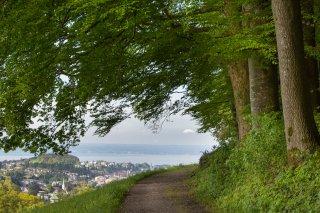 Faltkarten: Blick von der Bernegg zum Bodensee