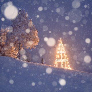 Faltkarten: Weihnachtsbaum Vogelherd bei Schneefall