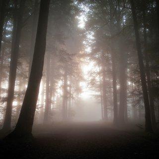 Karte: Weg ins Licht, Kapfwald